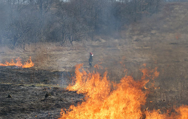 Straż pożarna gasi płonącą trawę