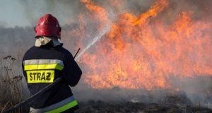 Straż pożarna gasi płonące trawy